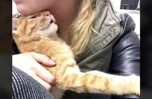 助け出された猫