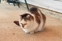 丸くなっている猫