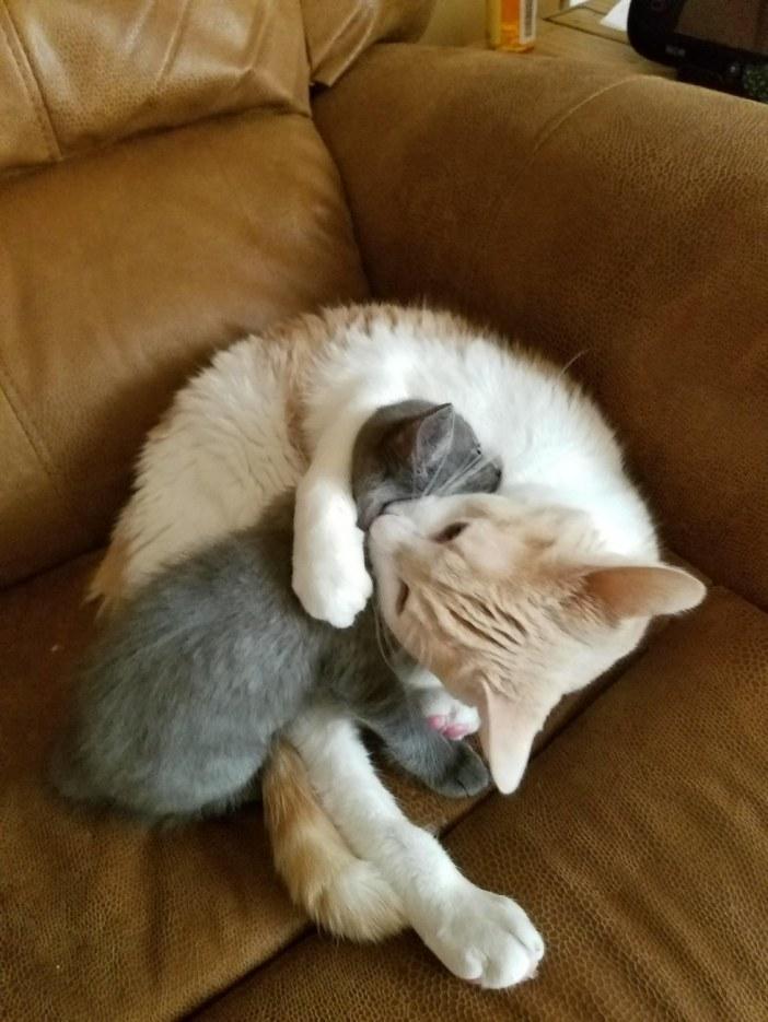 抱きしめる子猫と猫