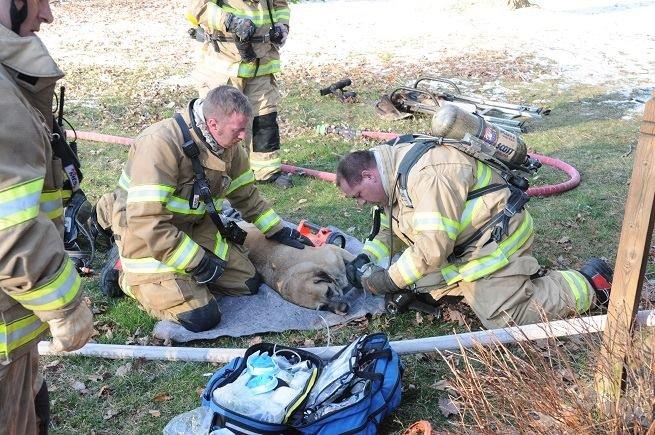 消防士と犬