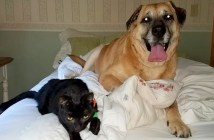 仲良しな犬と猫