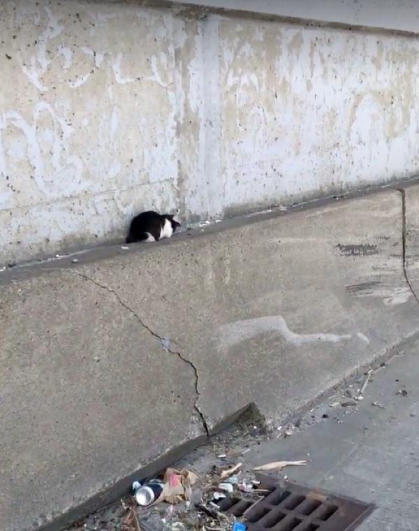 高速道路の猫