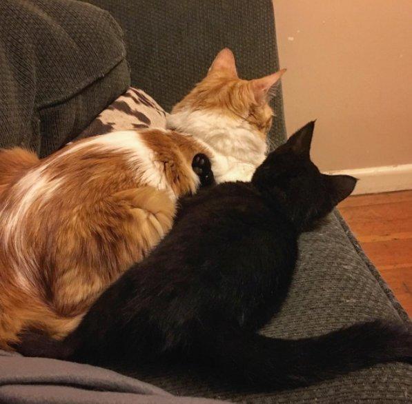 いつも一緒の猫