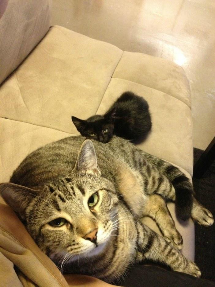 いつも一緒の子猫と猫