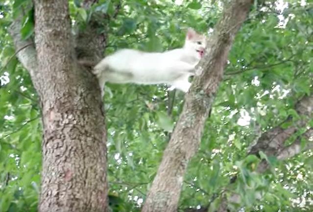 木から降りられなくなった子猫