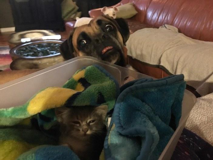 さらに犬に見られる子猫