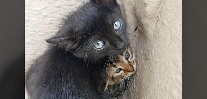コーナーの子猫