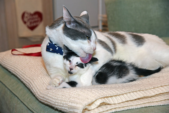 子育てをする猫