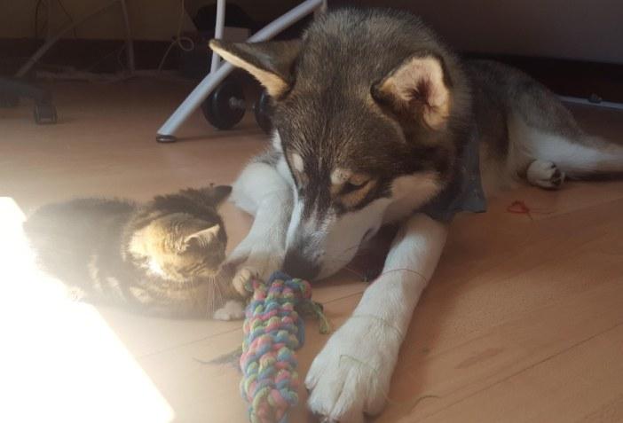 楽しい時間を過ごす犬と子猫