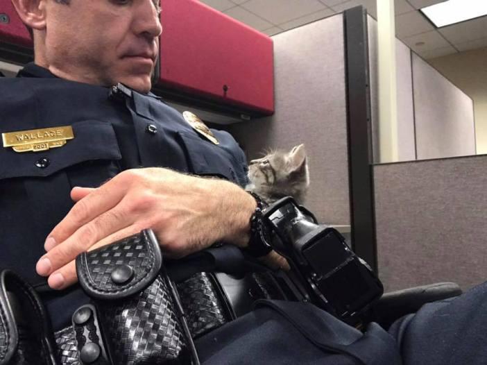 仲良しな警官と猫