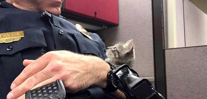 見つめる子猫と警官