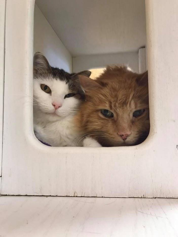 覗き見る猫