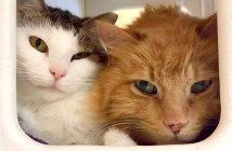 仲良しな2匹の猫