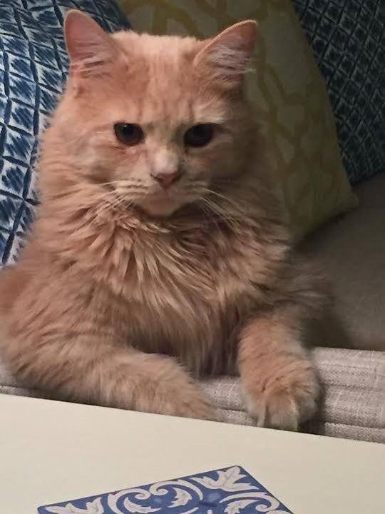 立派になった子猫