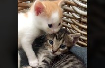遊び足りない子猫