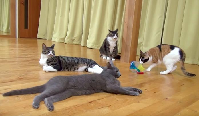 まったりとくつろぐ猫