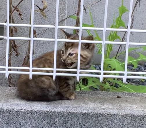 お母さんを探してなく子猫
