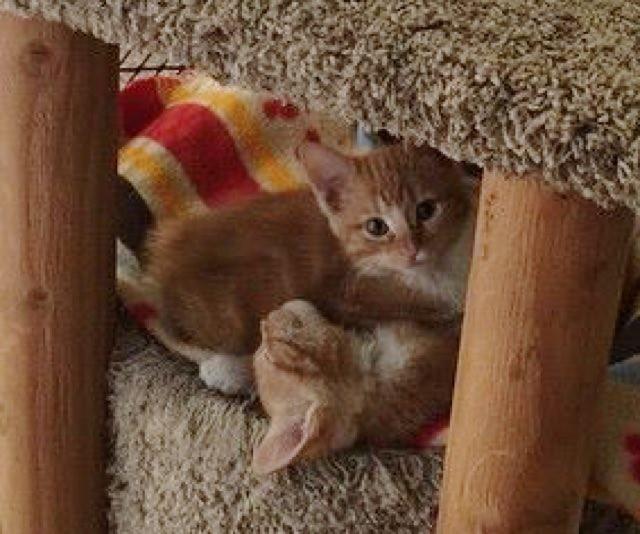 丸くなる2匹の子猫