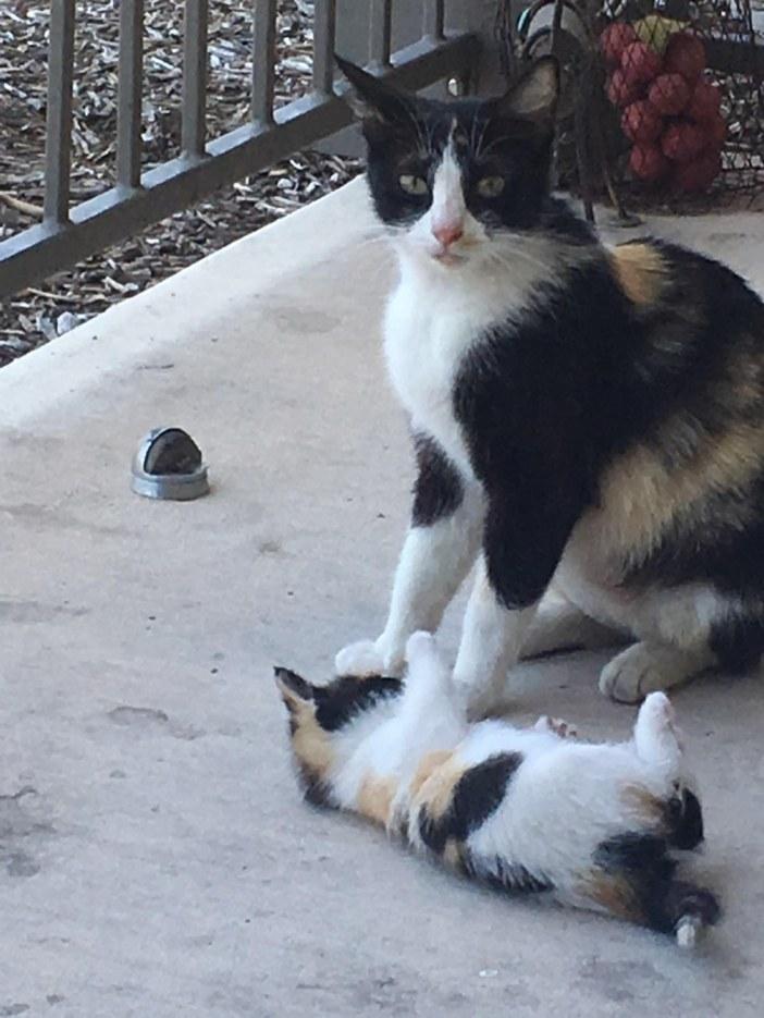 遊ぶ猫の親子