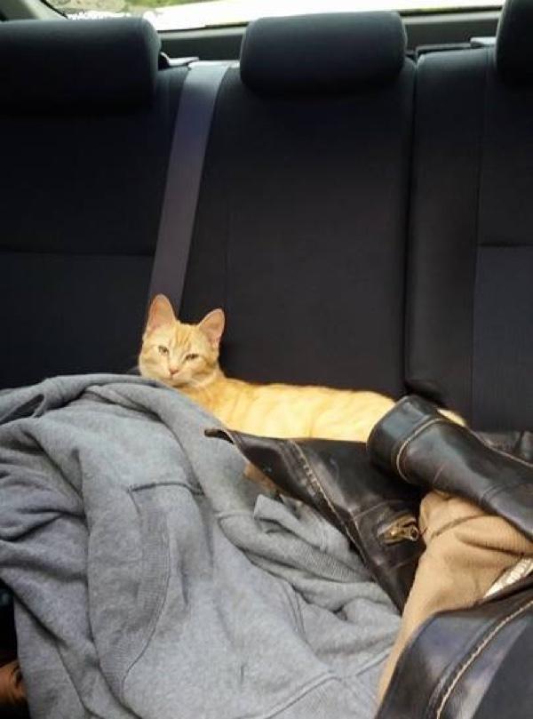 車でくつろぐ猫