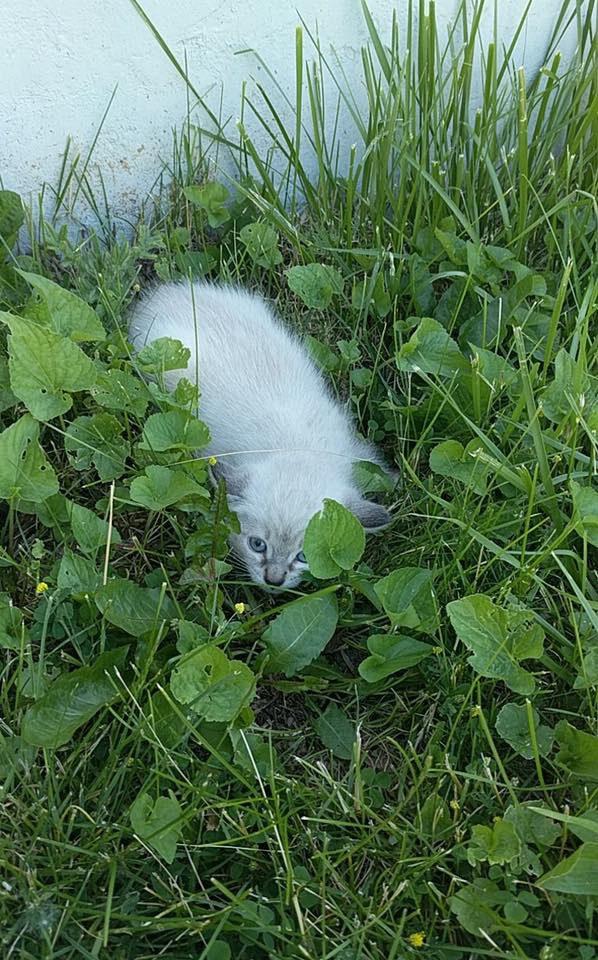 草の中の子猫