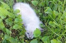 芝生で保護された子猫