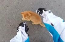 子猫を助けるライダー