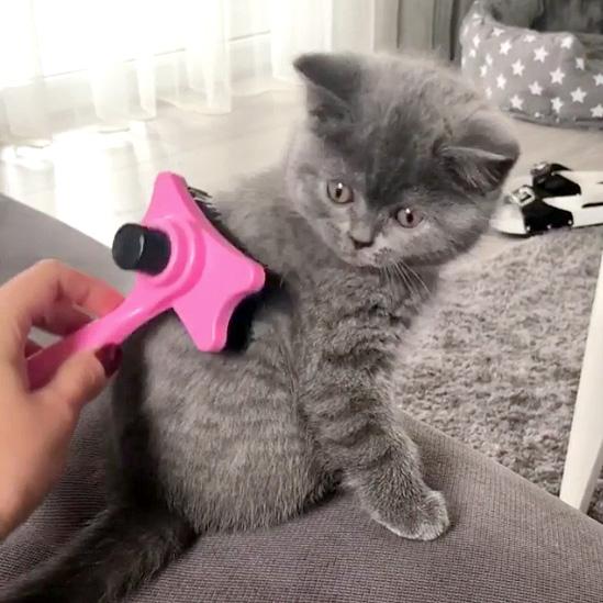 ブラシが気になる子猫