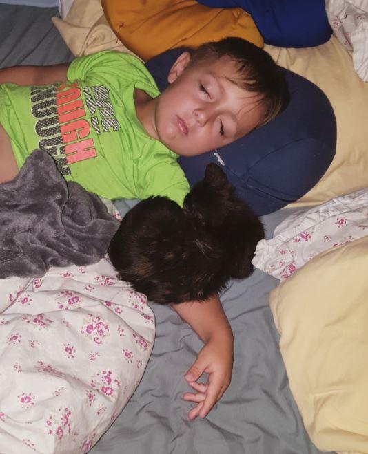 男の子と眠る子猫