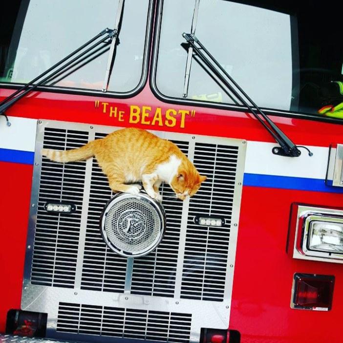消防車と猫
