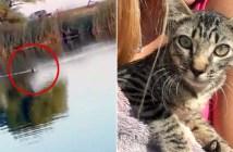 泳いで来た子猫