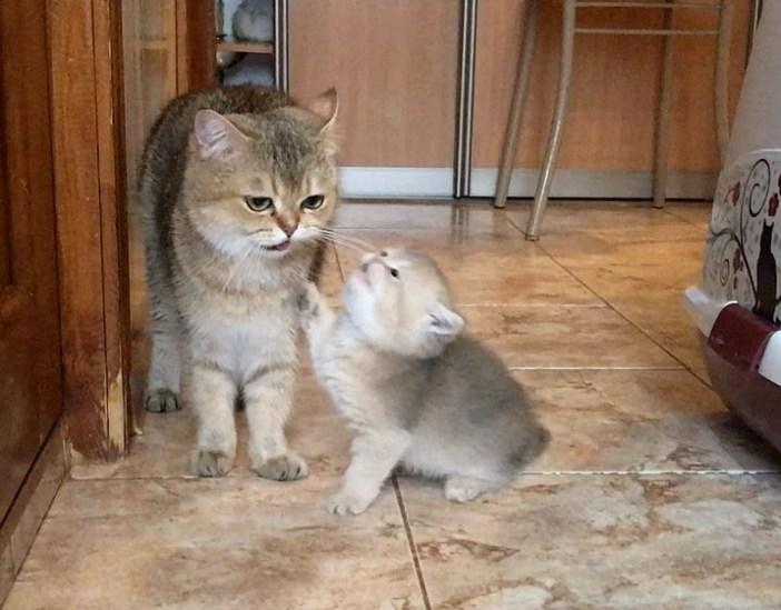 甘えてきた子猫