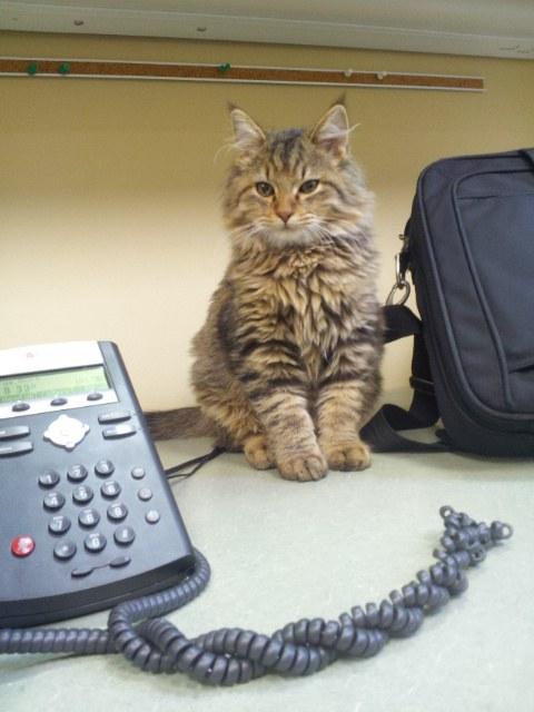 オフィスの猫