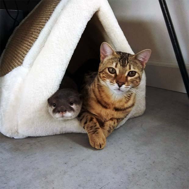 猫とカワウソ