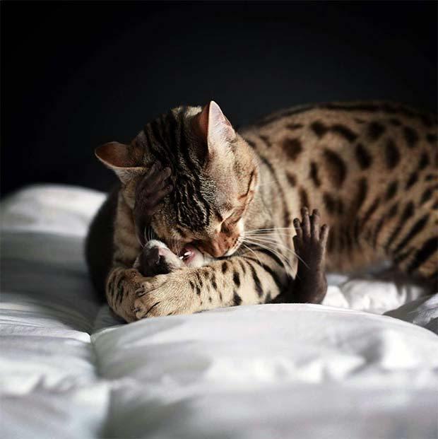 仲良しな猫とカワウソ