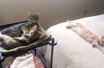 部屋を占領した子猫