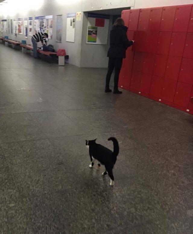 廊下を歩く猫