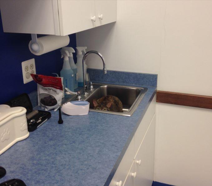 獣医さんから隠れている猫