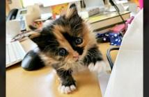 子猫のいるオフィス