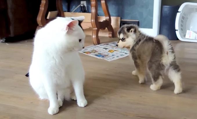距離を取る子犬と猫