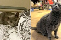 子猫が大きく成長
