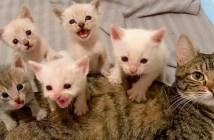 子猫達を育てる母猫