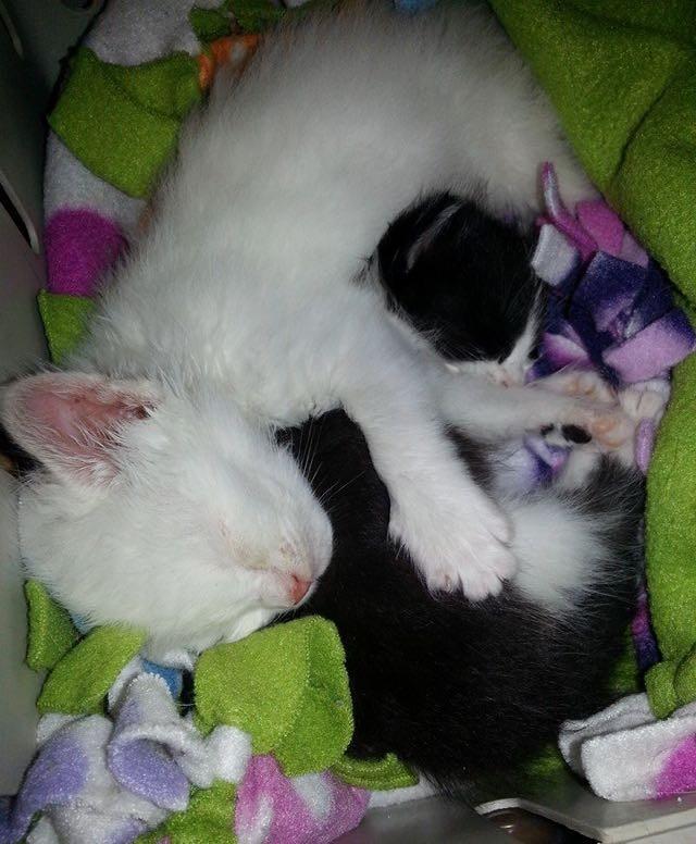 一緒に眠る子猫