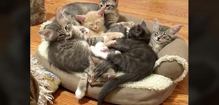 ソファいっぱいの子猫達