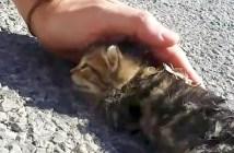 子猫に手をかざす