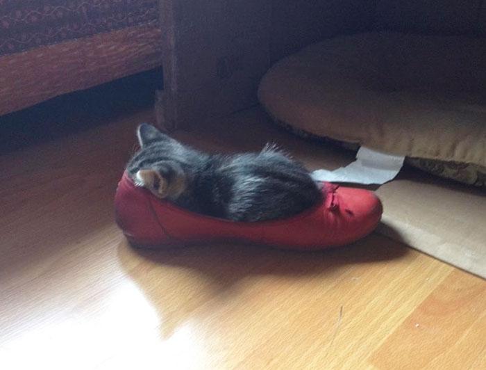 靴の中で眠る子猫