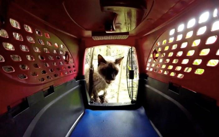 キャリーを覗く猫