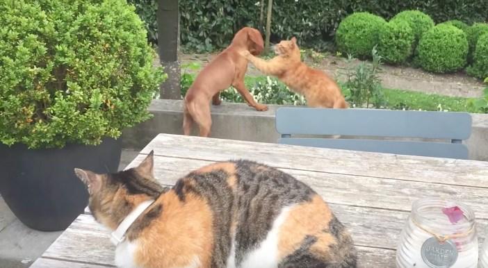 犬に襲いかかる猫