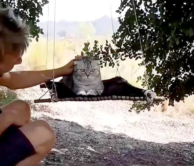ハンモックに乗る猫