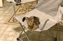 椅子に座っていた猫